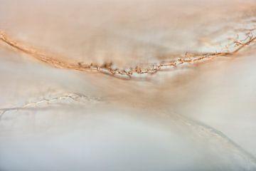 spiegelte die Spitze der Natur wider. von Alexandra Bijl