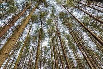 Bomen, kijk omhoog van Danielle Bosschaart
