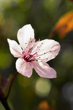 Licht roze bloem van Jasmijn Otten