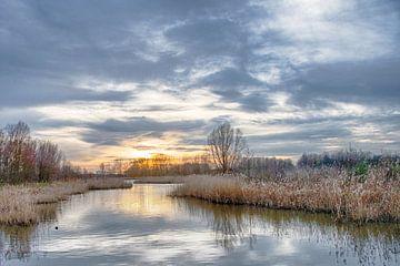 Wasser- und Schilflandschaft von Pieter van Marion