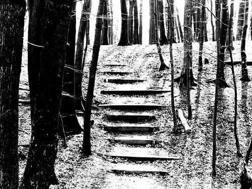 Trap in bos zwart/wit van