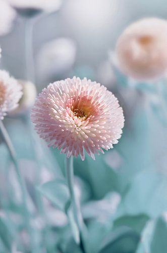 Bellis flower van Violetta Honkisz