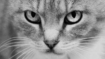 Kattenoog van Kirsten Warner