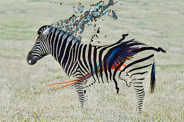 Zebra van Anett Kazimierska