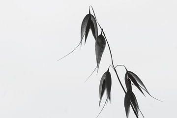 Simple sur Carla Mesken-Dijkhoff