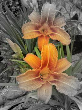 Lilien von Ines Thun