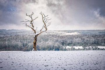 Einsamer Baum in einer dramatischen Landschaft von Jim De Sitter