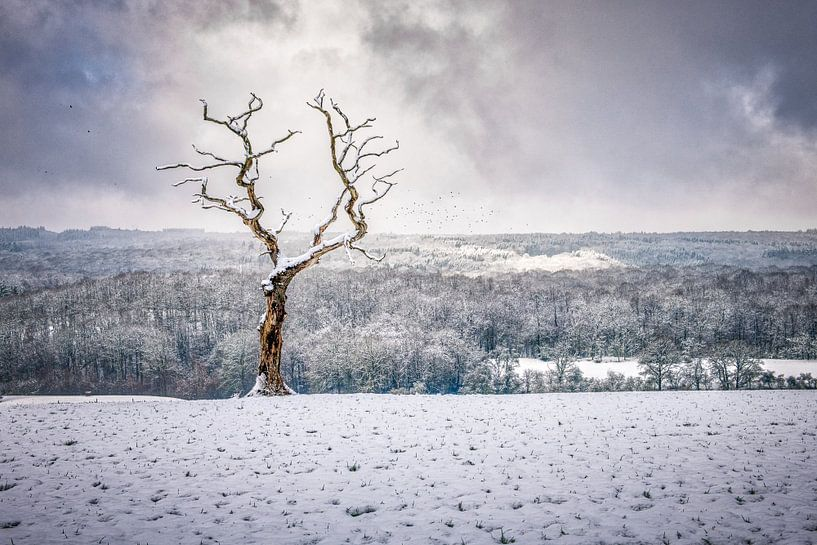 Eenzaam boompje in een dramatisch landschap van Jim De Sitter