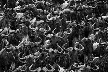 Wildebeest Crossing von Marijn Heuts