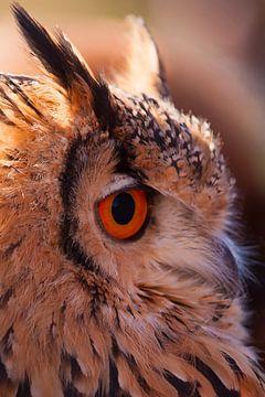 Uil (owl) van
