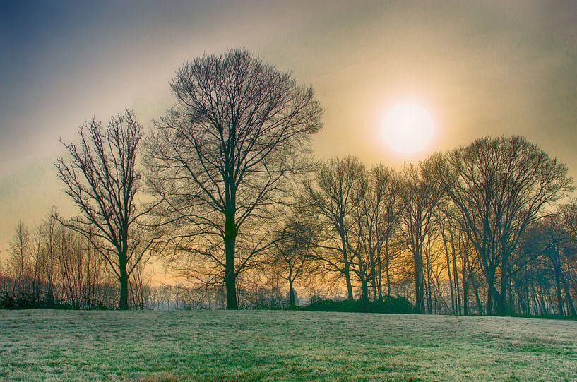 Winterzon van Mark Bolijn