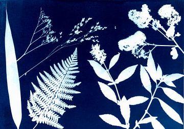 Blauwdruk van Astrid Meulenberg