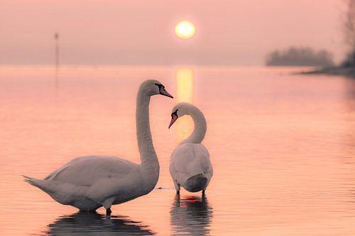 Two Swans van