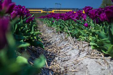 Tulpen met trein (Holland) von ErikJan Braakman