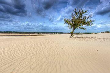 Einsamer Baum in der Loonse en Drunense Duinen von Rob Kints