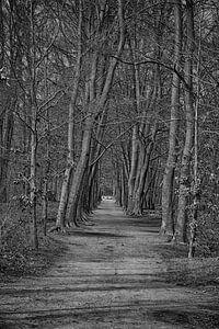Zwart wit foto van een bos van