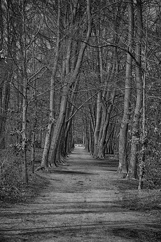 Zwart wit foto van een bos