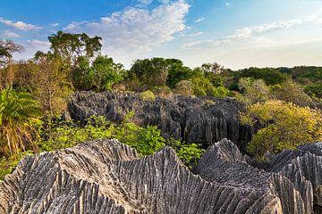 Petit Tsingy Madagaskar von Dennis van de Water