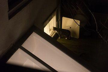 Middelburg - Katze von Maurice Weststrate