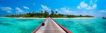 LPH 71180965 Île tropicale avec des palmiers sur BeeldigBeeld Food & Lifestyle