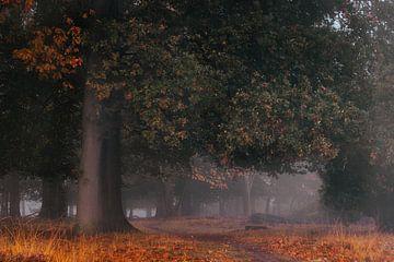 Herbstbogen in Buurse von Jeroen Brasz