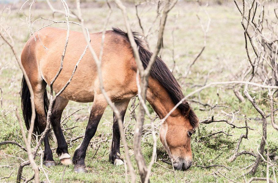 Paard III van Irene Hoekstra