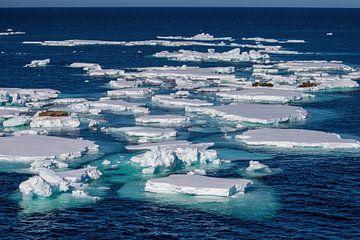 Eisschollen mit Walrossen von Merijn Loch