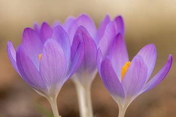 Frühling Blumen von Adri Klaassen