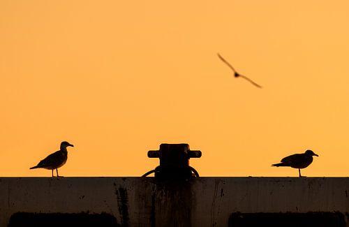 Zonsondergang met Zeemeeuwen van