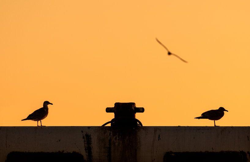 Zonsondergang met Zeemeeuwen van M DH