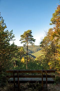 Un seul pin debout sur une montagne avec une large vue sur une vallée devant un banc sur Hans-Jürgen Janda