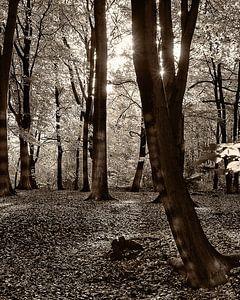 Herfst van Rien Gieltjes