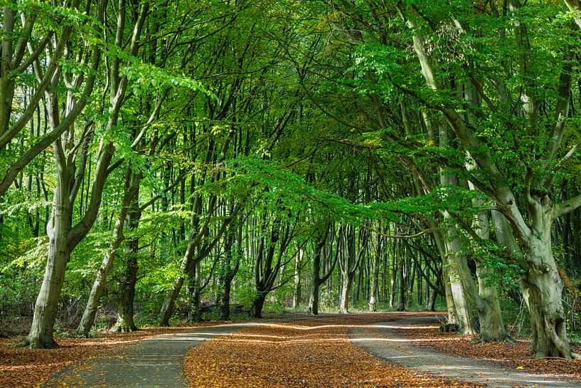 Amsterdamse Bos van Johan Zwarthoed