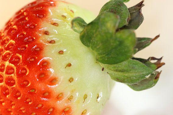 Erdbeere van Rosi Lorz