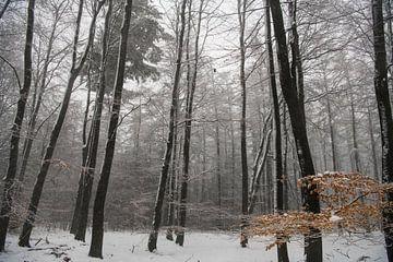 Die Veluwe im Winter von Kelvin Middelink