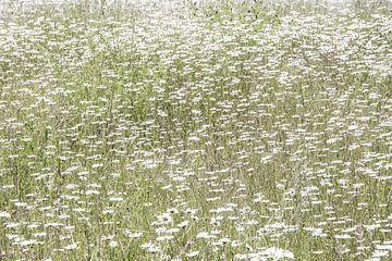 Ein Meer von weißen Blumen von Wendy Boon