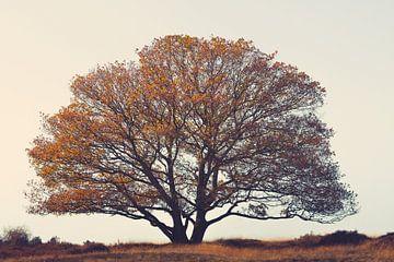 Gebroeders boom in het veld. van