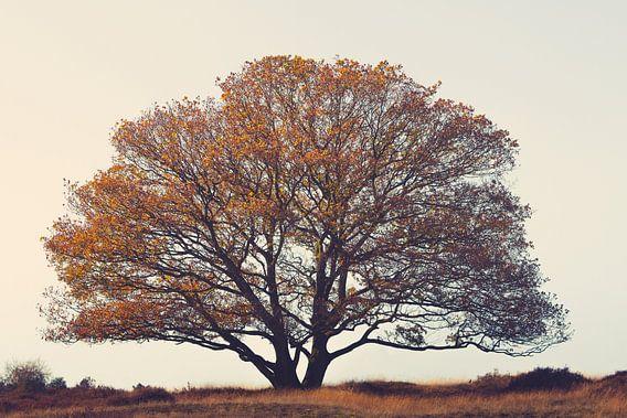 Gebroeders boom in het veld.
