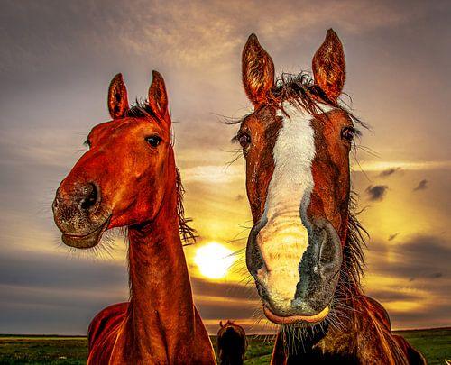 Verrassende Kinderkamer Paarden : Wanddecoratie van dieren op canvas poster en meer