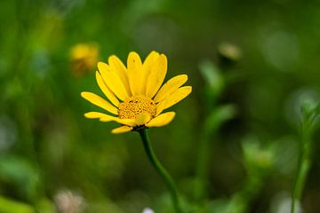 Gele bloem van Silvia Rikmanspoel