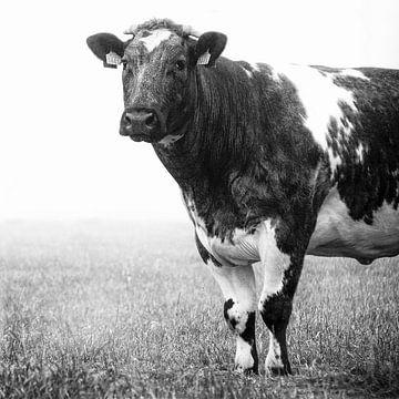 Koe in de mist 3 van Jacqueline Koster