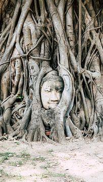 Buddha in Thailand (Ayutthaya) van Wendy Duchain
