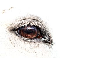 Auge des Pferdes von Judith Litjens