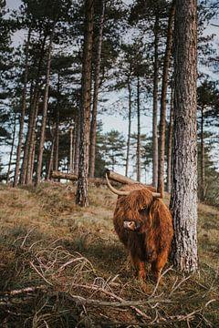 Nederlandse natuur van Froukje Wilming
