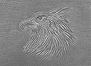 Adler ( Zeichnung , Radierung )