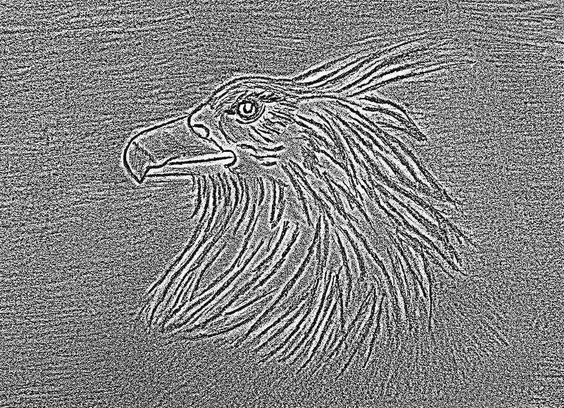 Adler ( Zeichnung , Radierung ) von Jose Lok