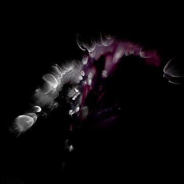 Abstraktes Gänseblümchen mit Bokeh von Anne Ponsen