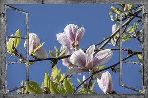 Venster uitzicht - magnolia