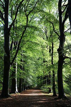 Wald in Beetsterzwaag von Pim van der Horst