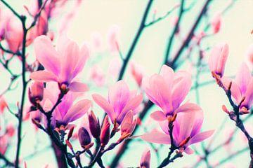 magnolia-pop van Die Farbenfluesterin